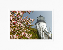 Spring Bloom at Owls Head Light