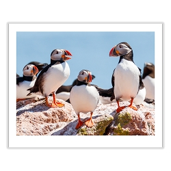 Puffin Tales